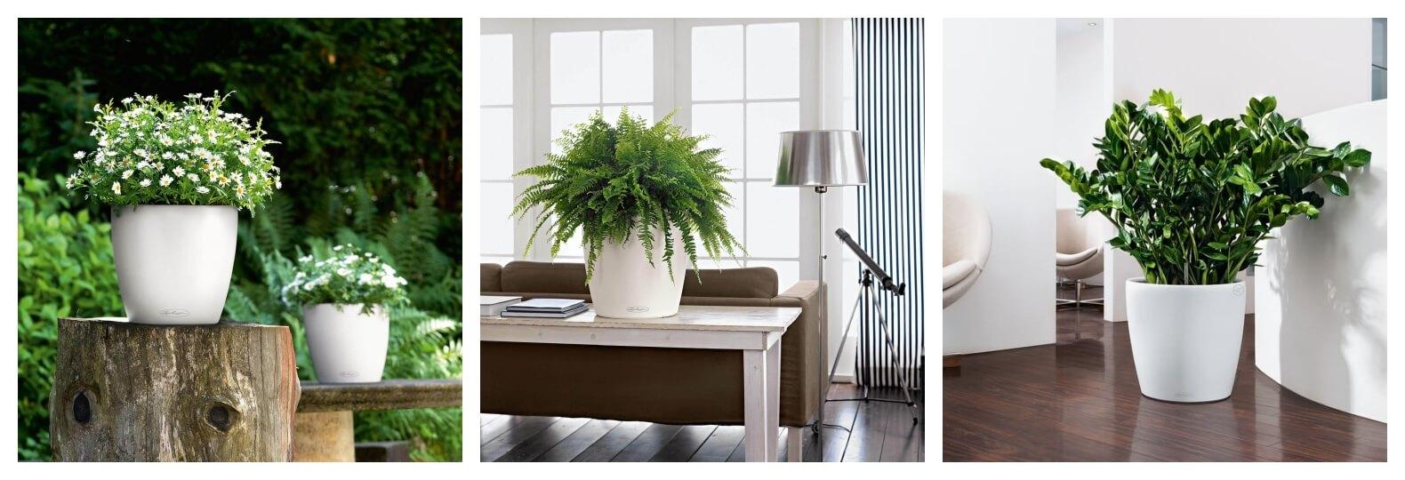 Masz Dość Usychających Roślin Doniczka Samonawadniajaca Classico Color Działa Cuda